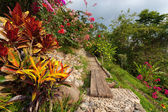 Beautiful Tropical Garden — Stockfoto