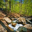 Stock Photo: Forest mountain river