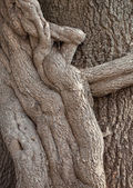 Old roots — Stock Photo