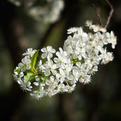 Kwitnące drzewa — Zdjęcie stockowe