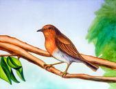 冬季鸟类 — 图库照片