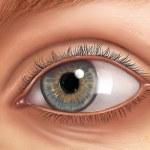 Auge-Anatomie — Stockfoto