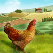 Hen and farm - Stock Photo