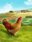 Hen and farm — Stock Photo