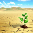 Stock Photo: Seedling in the desert
