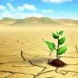 Seedling in the desert — Stock Photo
