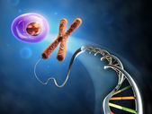 From Dna to cell — Stock Photo