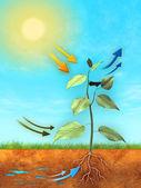 Fotosynteza — Zdjęcie stockowe