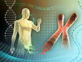 Ludzkiego chromosomu — Zdjęcie stockowe