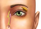 Glándulas lacrimales — Foto de Stock