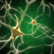 Neurons - Stock Photo