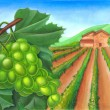 Stock Photo: Grape and rural landscape