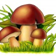 Mushrooms - Foto Stock