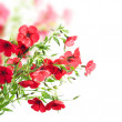 Red flowers — Stock Photo