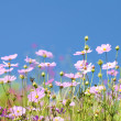 Bunch of spring flowers in the meadow - Stock Photo