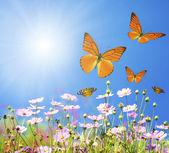 群的在草地上的春天的花朵 — 图库照片