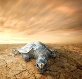 Dead turtle — Stock Photo