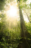 Green forest with ray of light — Stock Photo