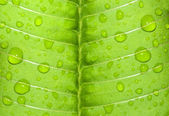 Water-drop on a green leaf after rain — Stock Photo