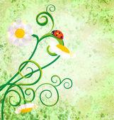 Red ladybird on daisy flowers grunge background — Stock Photo