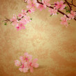 Spring blossom cherry tree and pink flowers on brown old paper g — Stock Photo
