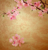 Spring blossom cherry tree and pink flowers on brown old paper g — Stockfoto