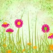 Red flowers  meadow grunge green background — Stock Photo