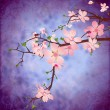 blossom cherry tree brunch on grunge blue square vintage backgro — Stock Photo
