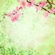 Pink cherry blossom branch on green grunge background easter ill — Stock Photo