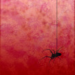 Textured red background with spider silhouette horror image — Stock Photo