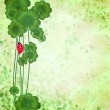 Clover with ladybug on green grunge texture background St. Patri — Stock Photo #9372956