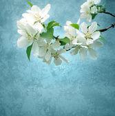 Rosa blommor blommande träd brunch djupa bokeh — Stock fotografie