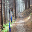 Hiking pole — Stock Photo