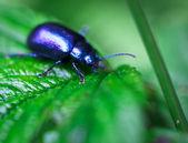 Beetle — Stock Photo