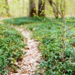 Trail in forest — Stock Photo