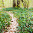 Trail in forest - Stock Photo