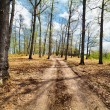 Stock Photo: Dirt road in the forest