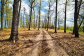 Dirt road in the forest — Stock Photo