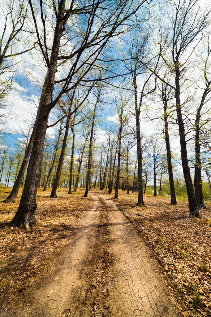 Landscape with dirt road in a beech forest with blue sky and clouds — Stock Photo #10049643