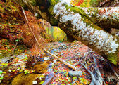Fallen tree in a valley — Stock Photo
