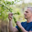 Agronomist checking cherry tree flowers — Stock Photo #10610013