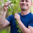 Agronomist checking cherry tree flowers — Foto Stock