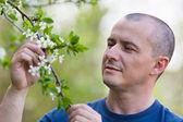 Agronomist checking cherry tree flowers — Stock Photo