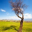 Lone tree — Stock Photo #10676607