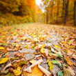 Stock Photo: Closeup on road through forest