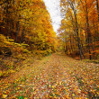 Stock Photo: Road through forest