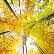 Stock Photo: Canopy of trees