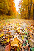 Closeup on road through forest — Stock Photo