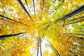 Canopy of trees — Stock Photo