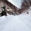 Road covered with snow — Stock Photo #9164238
